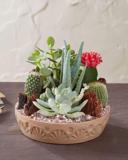 Kaktus 001