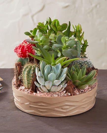 Tanaman - Beautiful Large Cactus