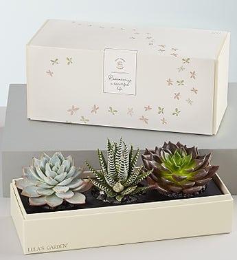Tanaman - Box of Cactus