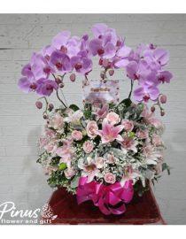 Bunga Meja Surabaya - Orchid Fairytale Love In Vase