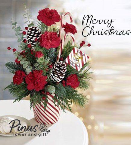 Bunga Meja Surabaya - Lovely Christmas Flowers